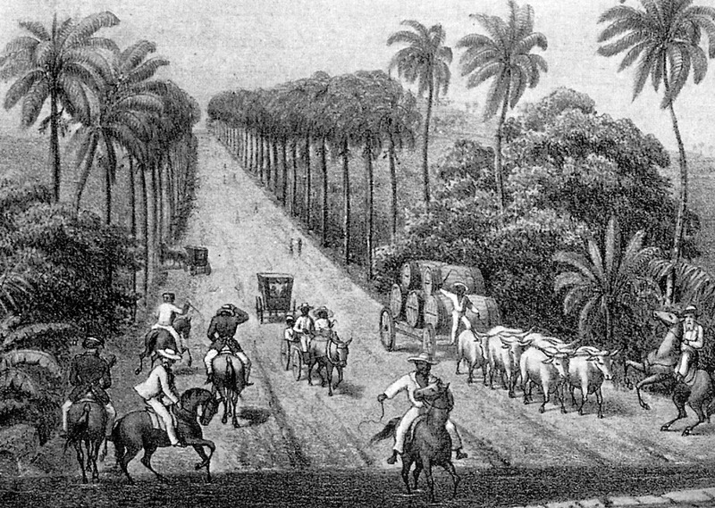 Equestrian traffic and carts, including carter driving an ox team loaded with hogsheads of sugar being taken to harbor. ( The image was published in J. Holm, The Corvette Heimdals mission to the West Indian Islands 1861 and 1862 [Copenhagen, 1863]); thanks to Leif Svalesen and George Tyson for this information).
