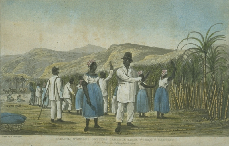 Caption, Jamaica Negroes Cutting Cane in their Working Dresses. Men and women in first gang cutting cane; supervised by a black driver with his staff.
