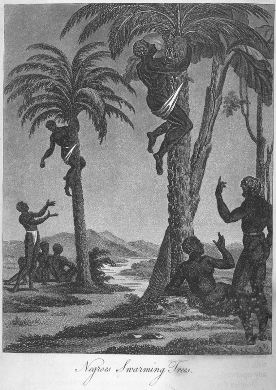 """This image depicts palm oil production in the Senegambia region. Durand described how """"the Negroes. . . climb [the trees] by means of a strong rope of cotton, or of palm leaves twisted together; this rope is long enough to embrace the trunk of the tree and the body of the man, leaving about two feet between them; he describes the palm tree, the popularity of palm wine, and the use of palm oil as a body ointment, in cooking, in the diet, and as a medicine"""" (p. 166-167). This image is one of several fanciful engravings created by the publisher for this volume and not based on an eye-witness sketch. Jean-Baptiste-Léonard Durand (1742-1812) was a French director for the Compagnie du Sénégal in 1785 and 1786. The first edition in French does not contain any images."""