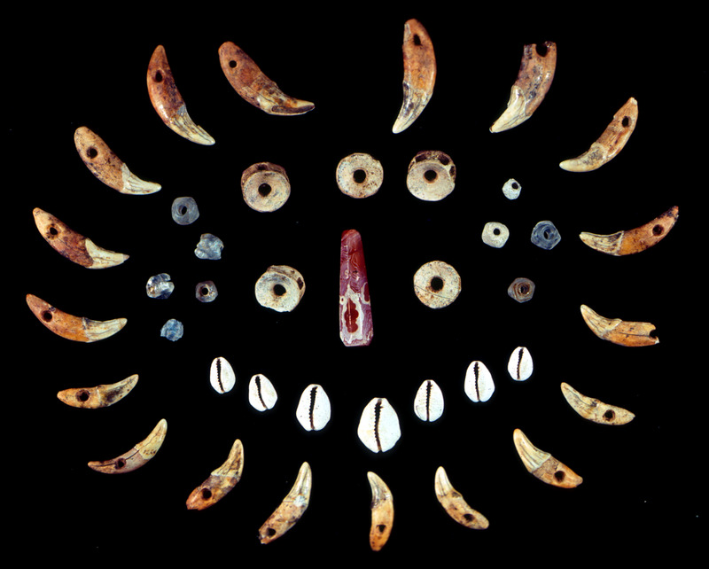 This photograph shows various pieces of a necklace found on a skeleton. This unique archaeological find was a necklace composed of dog's teeth, money cowry shells, fish vertebrae, glass beads; and a large reddish-orange carnelian bead in the center. When excavated the exact pattern of the components of this necklace could be not be ascertained but all items were found on or near the area of the burial's neck. See images Newton001 and Newton005.