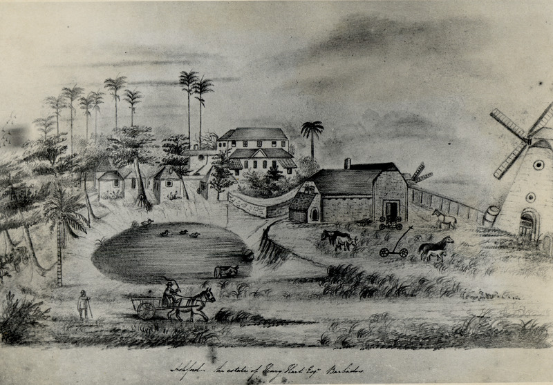 Caption, Ashford. the estate of Henry Hart Esq. Barbados; parish of St. John. Shows features typical of a Barbadian sugar plantation yard area in early period. This unique drawing was made by a teen-age girl between 1837 and 1845, several years after slave emancipation. However, the basic settlement pattern of the slave period is still quite evident. The drawing clearly shows major features of the plantation yard, including the mansion house (which still stands although modified over the years) windmill, boiling house, pond (from which slaves and livestock drew their water supplies), and located between the mansion house and pond, the houses of some of the laborers or ex-slaves. For more details on this drawing, see Jerome S. Handler and Frederick W. Lange, Plantation Slavery in Barbados: An Archaeological and Historical Investigation (Harvard Univ. Press, 1978), p. 297, note 3. A photograph of this drawing, with permission to reproduce, was graciously provided to Handler by Mrs. Mildred Hart Higgins, owner of the sketchbook which contains the drawing.