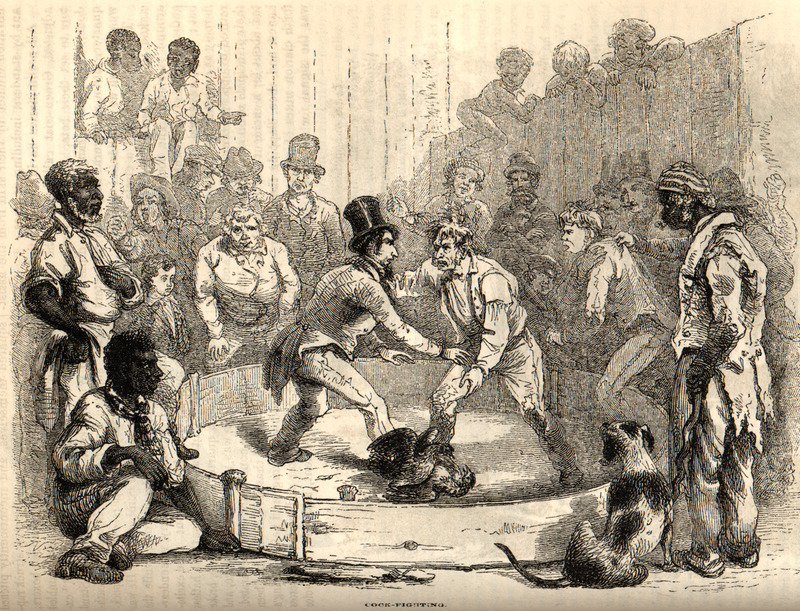"""This image depicts a crowd of black and white spectators gambling around a cock-fighting ring in North Carolina. David Hunter Strother (1816–1888) was a successful magazine illustrator and writer, popularly known by his pseudonym, """"Porte Crayon."""" He rose through the ranks of the union army to brevet brigadier general."""