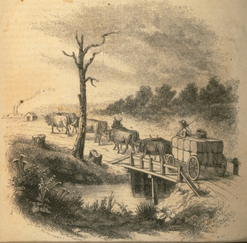 Carter with loaded ox cart taking bales of cotton to river port. Illustrates article (pp. 447 ff.) cotton and its cultivation, by T.B. Thorpe of Louisiana.