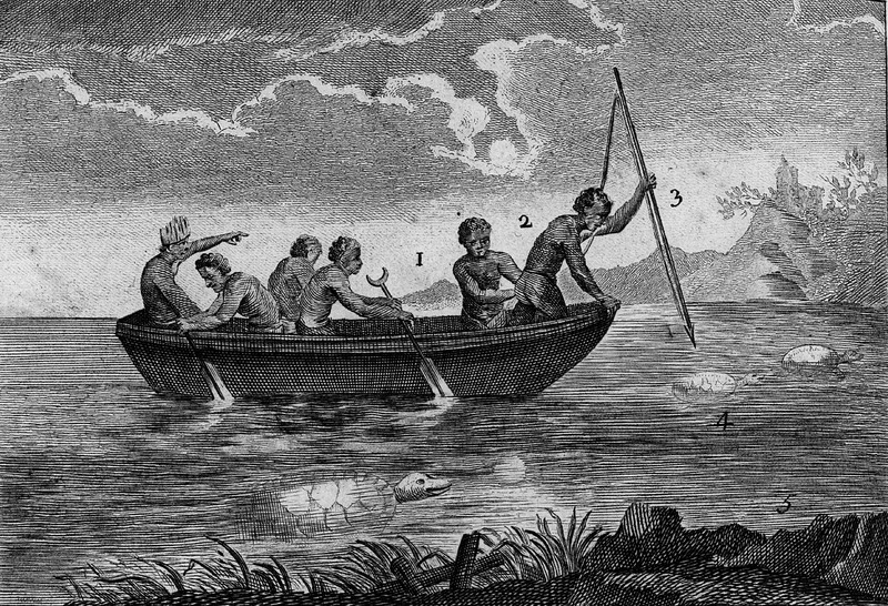 Titled, Pesche des Tortues. In a chapter devoted to the Tortoise, its distribution, trade, manner of eating, and recipes for its use, this accompanying engraving shows a group of blacks in a small boat hunting/fishing for tortoise. Various steps in the process are identified by number in the engraving. An accompanying explanation (vol. 1, p. 576) describes the steps. For example, no. 2, Negre qui observe une tortue pour la varrer (Negro observing a tortoise before harpooning it); 3. varre ferré par le bout qui doit percer l'ecaille de la tortue; ayant une corde attaché a l'autre bout ( harpoon iron-tipped at the end which should pierce the tortoise shell; having a rope/cord attached to the other end; 4. tortue qui va etre varrée (tortoise about to be harpooned). The bottom half of this engraving (not shown here) depicts a European turning over a tortoise on the beach in order to slaughter it. Both the top and bottom of this engraving were taken from a plate that was earlier published in Jean Baptiste DuTertre, Histoire Générale des Antilles (Paris, 1667), vol. 2, followng p. 246.