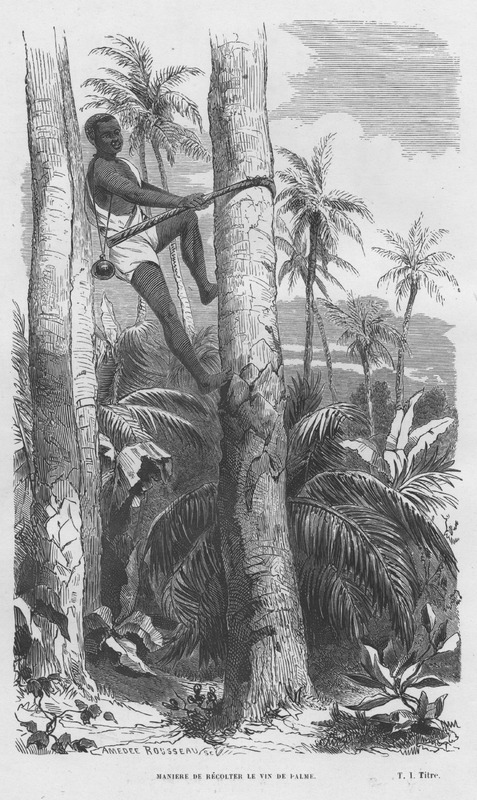 Caption: Maniere de rècolter le vin de palme (how palm wine is collected/harvested).
