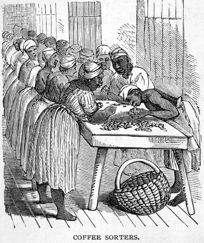 Describing this scene, the author, who visited Cuba ca. 1866, writes Great care is used in sorting so as to secure the best of coffee, free from dirt, pebbles, andThe author visited Cuba ca. 1866. decayed berries. This is done by the Negro women. . . . They are arranged on two sides of a long table, in a well-lighted room . . . . twenty or thirty of these women . . . picking away from the great piles of beans before them, and filling huge baskets with the bright green grain, keeping up all the time a monotonous chanting, in which each one takes a part (p. 488).