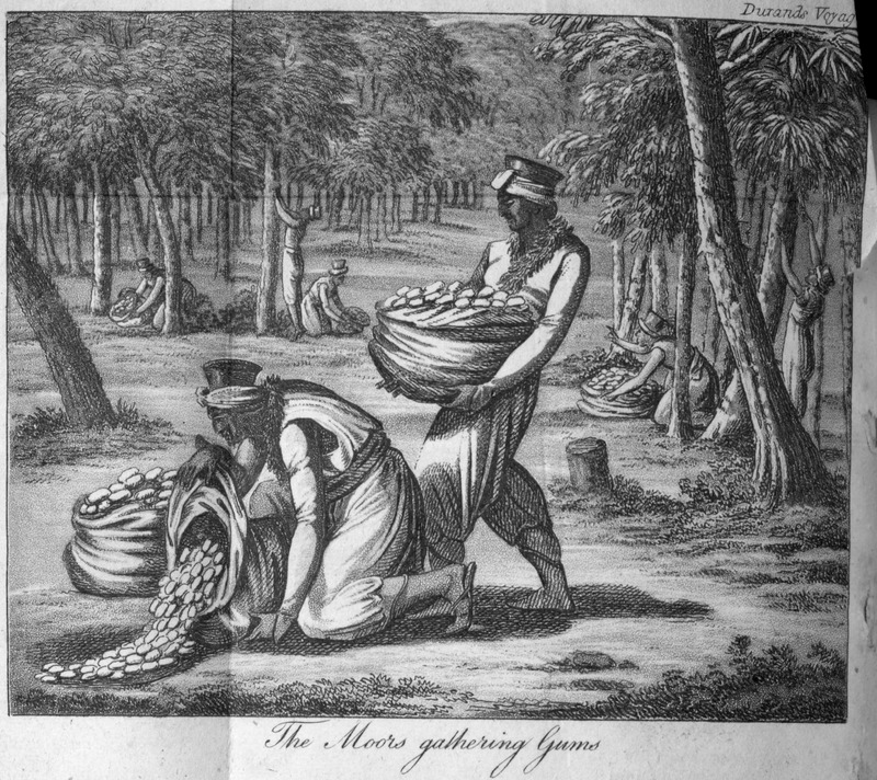 """This image depicts gum production in the Senegambia region. Durand described the gum tree and how the sap is harvested. He noted that """"gum from Senegal has become more important in Europe than gum from Arabia; and besides the usual application of it in manufactures and medicine. . . in several towns in France, they make it into an excellent preserve. The Moors and Negroes are very fond of eating it in its crude state"""" (p. 141-142). This image is one of several fanciful engravings created by the publisher for this volume and not based on an eye-witness sketch. Jean-Baptiste-Léonard Durand (1742-1812) was a French director for the Compagnie du Sénégal in 1785 and 1786. The first edition in French does not contain any images."""