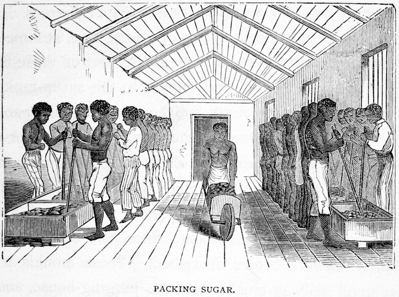 The sugar being thoroughly dried, sorted, and pulverized, is carried into the packing-room, where, ranged upon a slightly elevated frame, are the empty packing-boxes, capable of holding four hundred pounds each. These are filled with the loose sugar, a gang of Negroes . . . range themselves on each side of the rows, with broad, heaving packing-sticks in their hands, and thus all together they pound away, keeping time with their strokes, and making music with their voices. . . . The sugar being now tightly packed in the boxes, the latter are closed up and strapped with narrow strips of raw hide, and are then shipped to market (p. 370). The author visited Cuba ca. 1866.