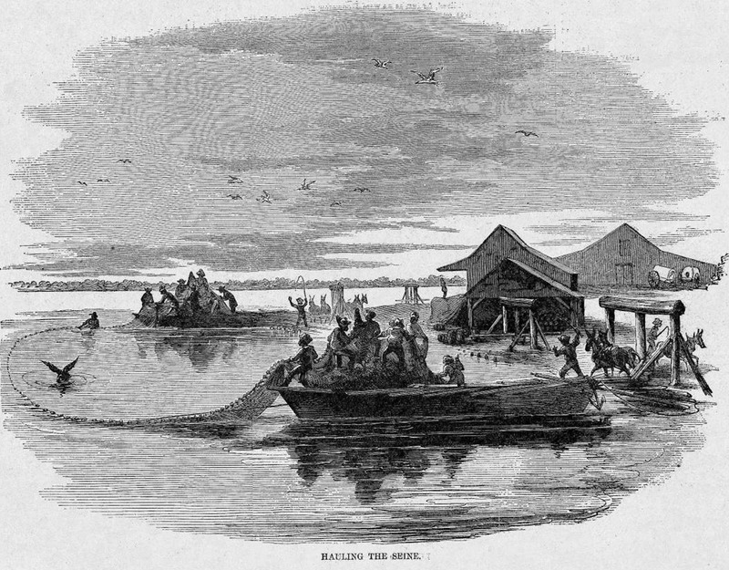 This scene illustrates the fisheries of Albermarle and Pimlico sounds in North Carolina, which were known to employ a considerable number of emancipated people from neighboring counties. The huge seines could measure up to two miles in length. Harper's Weekly: A Journal of Civilization was an American political magazine based in New York City and published by Harper & Brothers from 1857 until 1916. It featured foreign and domestic news, fiction, essays on many subjects and humor, alongside illustrations. It covered the American Civil War extensively, including many illustrations of events from the war.