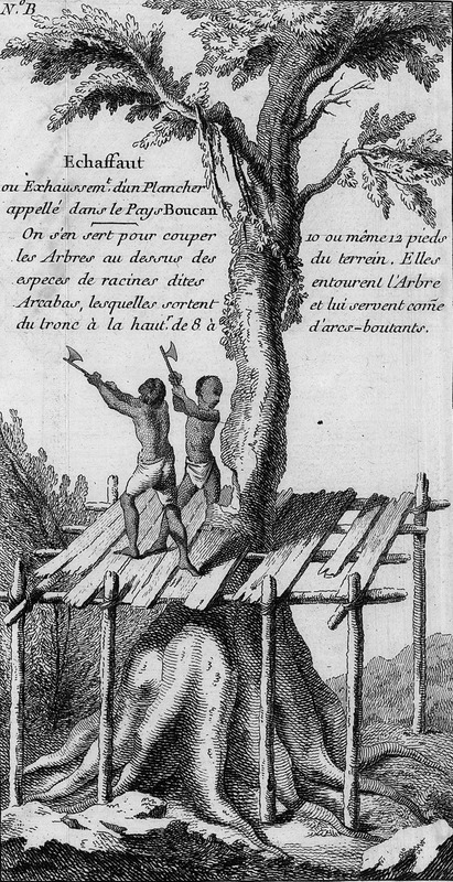 Shows two black men with axes felling a very large tree while standing on a scaffold or platform built around the tree trunk. The text notes (our translation): A raised scaffold [echaffaut/modern spelling, échasaud] or platform called Boucan in the country [i.e., Cayenne]. It is used to fell trees above a type of root called Arcabas that emerges out of the tree's trunk to heights of from 8 to 10 or even 12 feet above the ground. The roots surround the tree and function as buttresses [arcs-boutants]. Maroons in the forests of Suriname in the twentieth-century were felling trees in the same manner as shown here; see a photograph published in 1959 in Richard Price, Alabi's World (Johns Hopkins University Press,1990), p. 137.