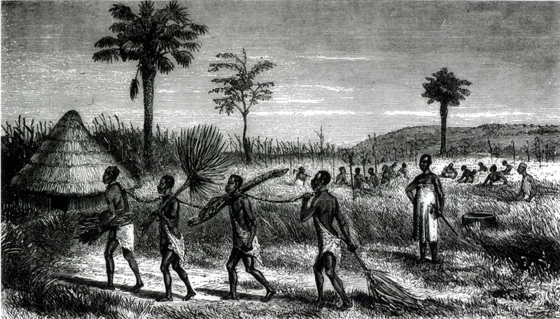 This image shows four men linked by chains, under guard. In the background, people are working rice fields. Although the scene reflects interactions with peoples from the Great Lakes region and illustrates indigenous domestic or household slavery surrounding rice production. Speke (1827–1864) made three expeditions in search for the source of the Nile. He was the first European to reach Lake Victoria. He is also known for propounding the Hamitic hypothesis in 1863, in which he supposed that the Wahuma ethnic group were descendants of the biblical figure Ham, and had lighter skin and more Hamitic features than the Bantu over whom they ruled. Sirboko was an African with whom Speke became acquainted.