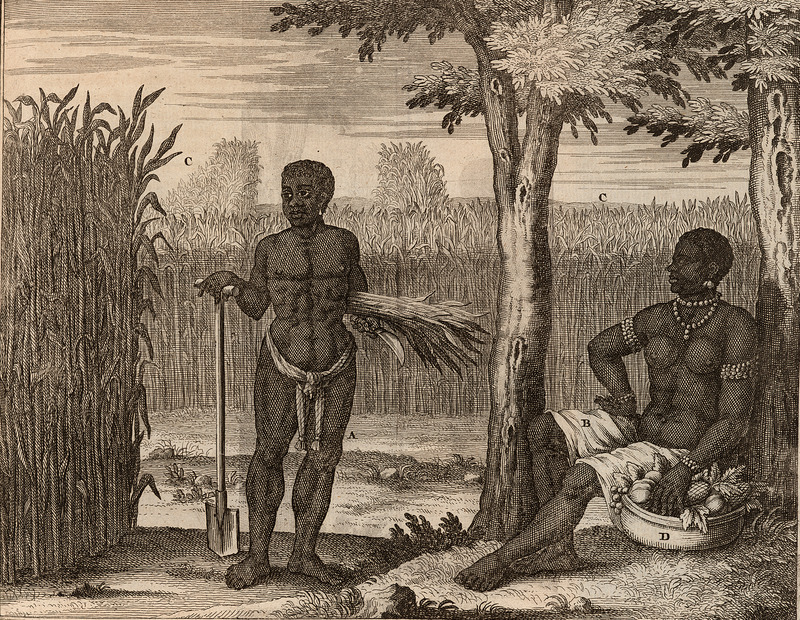 Two slaves against a backdrop of sugar fields. Woman, on right, is seated under a tree, with basket filled with fruits and vegetables; she wears bead bracelets, armlets, earrings, and a large bead necklace. The man, wearing a loin cloth, holds a spade in one hand and a cutlass or knife in the other, with a bunch of sugar cane under his arm. Letters A-D, very briefly identify the images in this scene. As translated: A, Negro; B, Negress; C, Sugar Cane; D, A pagaal, or basket for carrying produce.