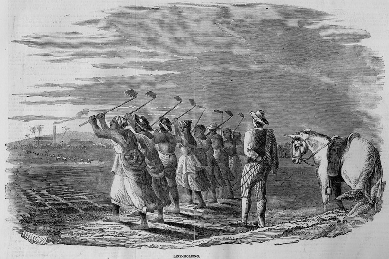 Field gang of men and women, digging cane holes in preparation for planting. Image accompanies article, Sugar Cultivation in the West Indies.  Although about a decade after slave emancipation in the British West Indies, this scene (one of four in the article) can easily serve for the later slave period. This same illustration and accompanying article appeared in Ballou's Pictorial (Boston); however, the Ballou article specifies that the locale is Jamaica and that the engraving was made from the designs of an artist who resided for a long time in that island.