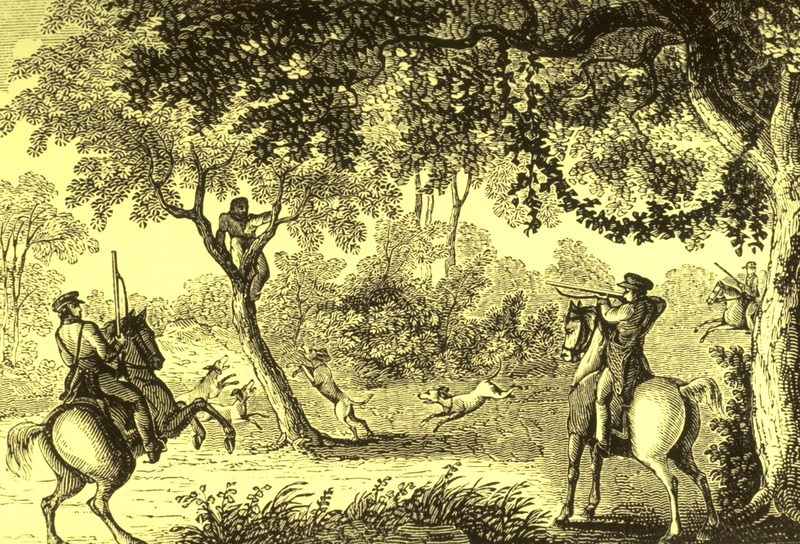 Slave hiding in a tree, trapped by armed whites on horseback; dogs surrounding tree. Illustration aken from p. 265 of an unidentifed publication, probably an abolitionist tract.