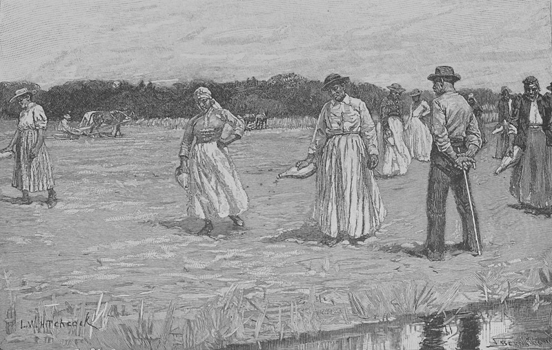 Women sowing rice on a South Carolina plantation; a Black overseer supervises the work. Although several decades after emancipation, this scene may evoke images of the late ante-bellum period.