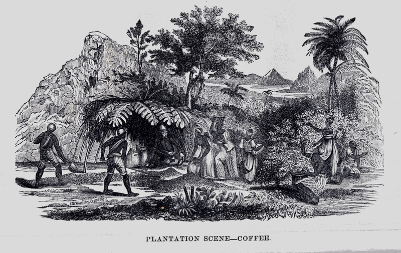 Captioned, plantation scene-coffee; men and women gathering and drying coffee beans. No explanation is given for this illustration, but it is clearly based on one in Johann Moritz Rugendas, Voyage Pittoresque dans le Bresil (Paris, 1835); see image reference NW0050.