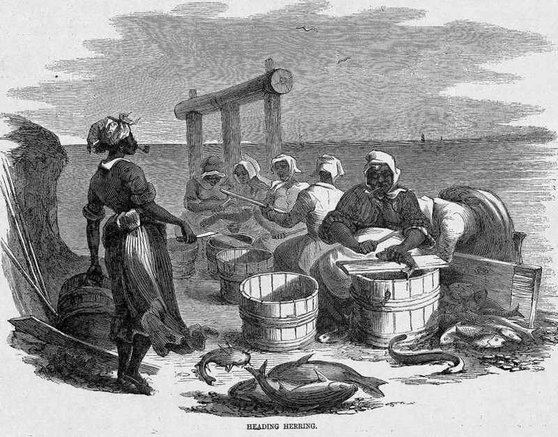 This image shows women, some with pipes in their mouths, removing fish heads on a pier. Harper's Weekly: A Journal of Civilization was an American political magazine based in New York City and published by Harper & Brothers from 1857 until 1916. It featured foreign and domestic news, fiction, essays on many subjects and humor, alongside illustrations. It covered the American Civil War extensively, including many illustrations of events from the war.