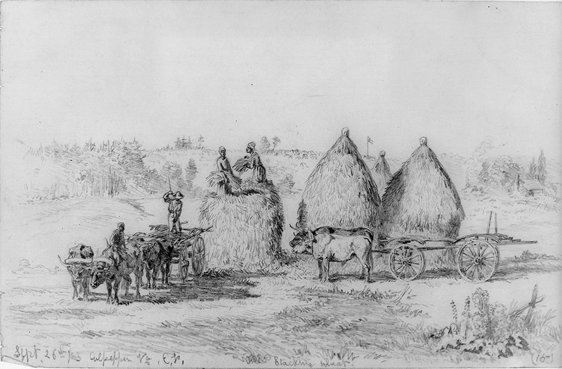 A drawing made by Edwin Forbes (1839-1895) which shows men and women in a field stacking wheat; two oxcarts in the foreground.