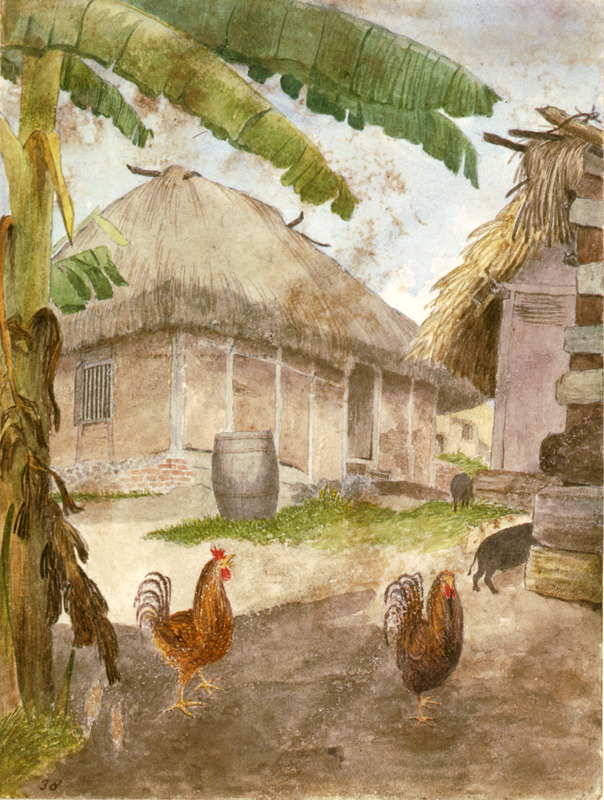 This watercolour shows a rural house and yard with chickens in the front. William Berryman was an English artist who lived in Jamaica for eight years between 1808 and 1816. He produced about 300 pencil drawings and watercolour of people, landscape, settlements, and flora in the island's southern parishes and the general region surrounding Kingston. Several other Berryman works are reproduced in T. Barringer, G. Forrester, B. Martinez-Ruiz, et al., Art and Emancipation in Jamaica: Isaac Mendes Belisario and his Worlds (New Haven: Yale Center for British Art in association with Yale University Press, 2007).