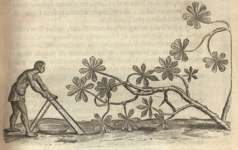Shows a slave grating the manioc plant in the process of making flour. The same illustration appears in the 1665 edition of De Rochefort.